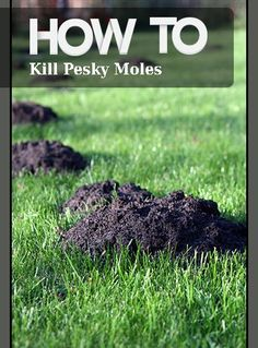 Tips and tricks to getting rid of moles.  How to rid yourself of these pesky creatures once and for all.