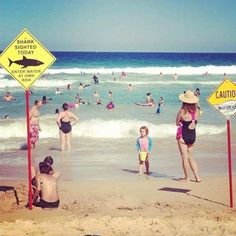 Meanwhile in Australia – Houmer Funny Australian Memes, Aussie Memes, Meanwhile In Australia, Australia Funny, Lol, Try Not To Laugh, Funny Photos, Epic Photos, Laugh Out Loud
