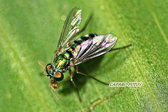 insecto pequeño
