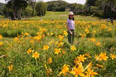 field of highland flowers at Gunma, Japan