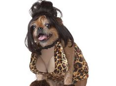 Pet costumes | Sexy Pet Halloween Costumes - Business Insider