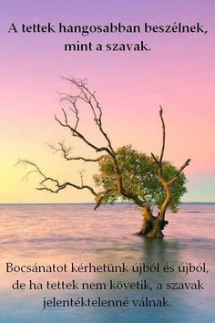 Solitude in Splendour - Nudgee Beach - Queensland - Australia Ikebana by Nature! Beautiful World, Beautiful Places, Nature Tree, Amazing Nature, Wonders Of The World, Bonsai, Places To See, Sunrise, Scenery