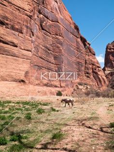 view of a animal and cliff. - Image of a animal and cliff.