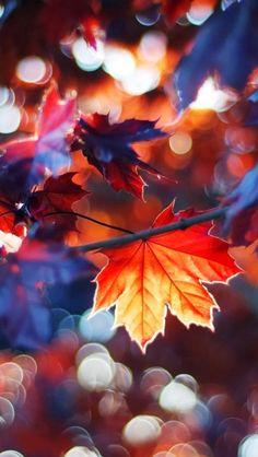 GreatyStuff: Sonbaharın Işıkları