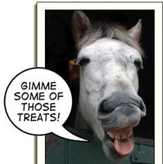 What is your horse's favorite treat?