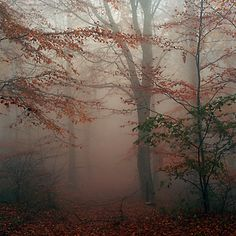 autumn fog, I drove through a scene like this, this very morning.....