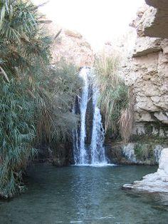 Ein Gedi | Desert Oasis - Ein Gedi, Israel