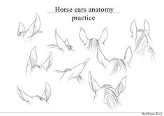 This isn't a lineart to color, this is detailed view of horse ears to practice horse anatomy. Male Figure Drawing, Body Drawing, Anatomy Drawing, Anatomy Art, Ear Anatomy, Horse Anatomy, Horse Drawings, Animal Drawings, Arte Equina