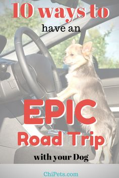 Travel with Pets | R