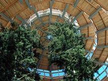Stezka v korunách stromů v Bavorském lese - Vyhlídková věž - bavorská Eiffelovka Places To See, Travelling, Plants, Plant, Planets