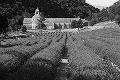 Abbeye de Senanque, Provence