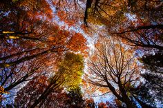 The colors of fall by Bettina  on 500px