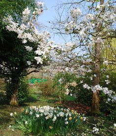 Giverny | Monet's Garden in Early April