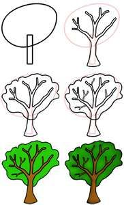 How to draw a Tree: from shapes to details