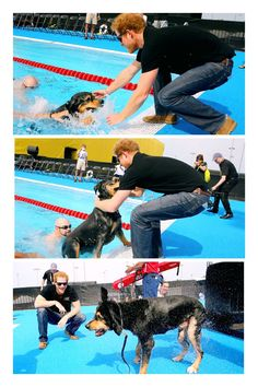 Prince Harry helps a service dog out from the pool as they take part in a race in the pool with their Invictus competitor handlers on the final day of the Invictus Games Orlando 2016 at ESPN Wide World of Sports on May 12, 2016 in Orlando, Florida.