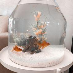 Betta Fish Bowl, Betta Fish Tank, Small Fish Tanks, Cool Fish Tanks, Goldfish Tank, Goldfish Bowl, Fish Tank Themes, Fish Tank Decor, Fish Tank Terrarium