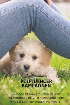 Es gibt viele Erfolgsgeschichten, wie Hundternehmen mit  einem Fokus auf Social Influencer innerhalb kurzer Zeit massiv ihre Reichweite steigern konnten. Positiver  Nebeneffekt: Wenn die Kampagne kreativ und clever umgesetzt werden, steigt oft nicht nur die  Bekanntheit, sondern gibt auch Image und Kundentreue Aufwind. Kein Wunder also, dass der Markt der  Hundeblogger und Petfluencer größer wird. Influencer, Instagram Tips, Fur Slides, Blog Tips, Dogs, Animals, Dog Videos, Amazing, Creative