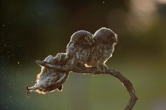 The Comedy Wildlife Photo Awards compile hilariously candid photos of animals in the wild pulling faces and striking funny poses. Here are this year's winners. Funny Wild Animals, Wild Animals Pictures, Funny Animal Photos, Animals Images, Funny Images, Animal Pictures, Cute Animals, Comedy Wildlife Photography, Photography Awards