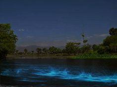 viajaBonito: Bioluminiscencia en Laguna de Manialtepec, Oaxaca, México.