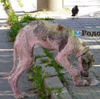 """""""O Grito do Bicho"""": Cadela com a pele totalmente escamada passa por tr..."""