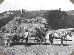 Horse Drawn Carriage [Horse-drawn wagon is piled with hay from the field]. Old Pictures, Old Photos, Vintage Photographs, Vintage Photos, Horse Drawn Wagon, Old Farm Equipment, Ranch Life, Vintage Farm, Draft Horses