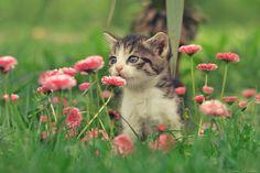 Smells nice? by ZoranPhoto on DeviantArt