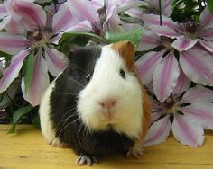 I am black and white and brown. I am awesome. I outshine the flowers of the meadow.