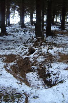Ardennes Forest; Bastogne, Belgium. Fox Holes of Easy Company.  No matter how many times you go, it still has that eery feeling as you walk through the forest.