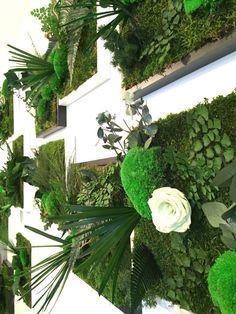 TABLEAUX PETIT FORMAT - Vegetal Indoor : Mur végétal stabilisé