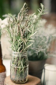 herbs instead of flowers as table decor