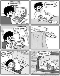 Pare, gato!