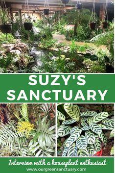 Indoor Garden, Indoor Plants, Suzy, House Plants, Interview, Green, Pictures, Medium, Create