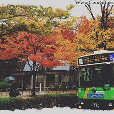 Location Higashi OjimaEast Tokyo 11-Nov neighborhood in Fall http://ift.tt/2eJMIDi #japan_daytime_view #nature_archive #phos_japan #ig_japan #bestjapanpics #icu_japan #bestjapanpics #gf_nature #wp_japan @icu_japan @japan_daytime_view @_photo_japan_  @art_of_japan @instagramjapan @wp_japan @japan_of_insta @lovers_nippon #nature_brilliance #ig_myshot #tv_nature #ig_color #rsa_nature #outdoors #bestnatureshots @team_jp @leaveonlyleaves @igersjp