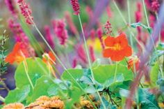 Have fresh herbs year-round with a little preparation, plant know-how and winter protection.