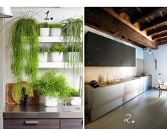 100 decors: Lifestyle: Plants or not? That is the question...