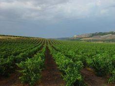 La Ribera de Duero elegida mejor región vitivinícola del mundo.
