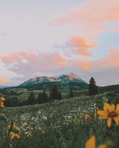 aesthetic mountains and flowers 🌻💓