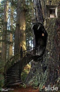 Fantastic Fantasy House