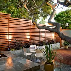 modern backyard, horizontal fence, big tree