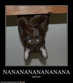 funny cat memes | funny cat pictures lolcats nananananananana - Meme Lulz 2