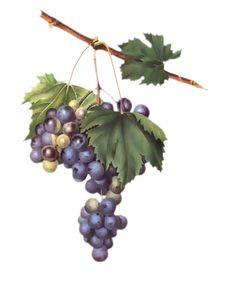 tubes fruits - Blog de l'ile de kahlan