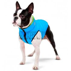 Dog Jacket, Vest, Yorkshire Terrier, Boston Terrier, Cat Supplies, Outdoor Dog, Collar And Leash, Shih Tzu, Dog Toys