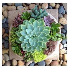 Nice succulent arrangement by Chicweed Patio & Garden | See more about Succulent Arrangements, Succulents and Patio Gardens.