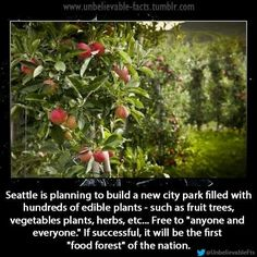 Seattle to Build Nation's First Food Forest filled with edible plants & herbs free for the taking. The city's new park will be filled with edible plants, and everything from pears to herbs will be free for the taking. Conservation, Angst Quotes, Seattle Food, Seattle Usa, Seattle News, Think Food, Wtf Fun Facts, Crazy Facts, We Are The World