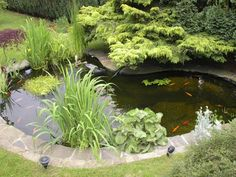 A collection of ideas and designs for small and large backyard ponds … in a series of photographs. includes koi carp ponds, Japanese ponds, terraced ponds and more. Garden Design, Backyard Water Feature, Water Features In The Garden, Small Gardens, Backyard Landscaping, Garden Pond Design, Ponds Backyard, Floating Plants, Backyard
