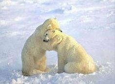 Imágenes Bonitas Animales - Vol.1 (20 Fotos)