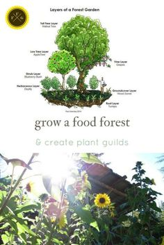 create plant guilds & food forests with permaculture design