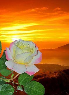 A rózsa és a gyönyörű, naplemente 🌟 Beautiful Moon, Beautiful Roses, Beautiful Images, Flower Images, Flower Art, Rose Flower Wallpaper, Pictures Of Jesus Christ, Moon Images, Hybrid Tea Roses