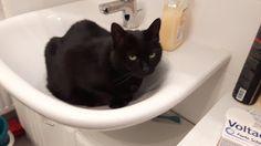 tiere in film und bild sowie eigene erlebnisse: meine katze