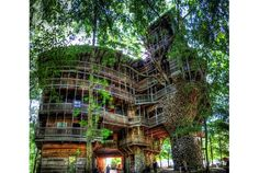 Horace Burgessさんによる、10階建ての高さの世界一大きなツリーハウスの紹介。